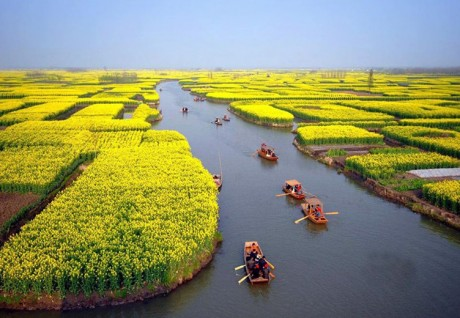 Campos floridos (China)