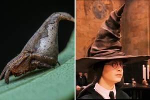 Aranha Eriovixia Gryffindori e o chapéu seletor do filme 'Harry Potter'