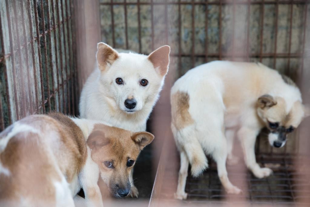 Cachorros de várias raças esperando resgate em Chungcheongnamdo, na Coreia do Sul. Cortesia Humane Society International