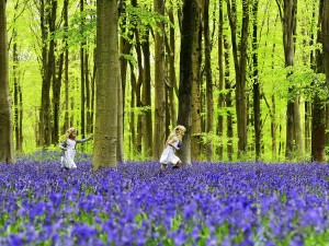 Local youngsters Bella (L) and Daisy run through a forest covered in bluebells near Marlborough in southern England, May 4, 2015. The Savernake Forest and West Woods, managed by the Forestry Commission and replanted in the 1930s to 1950s with beech trees, provide one of the most spectacular sites in Britain for seeing bluebells at this time of year. REUTERS/Toby Melville      TPX IMAGES OF THE DAY