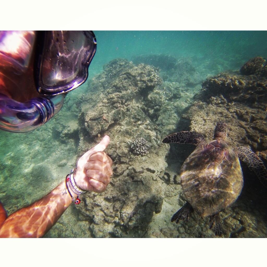 Eu nadando com uma tartaruga na praia de Turtle Bay, em Oahu