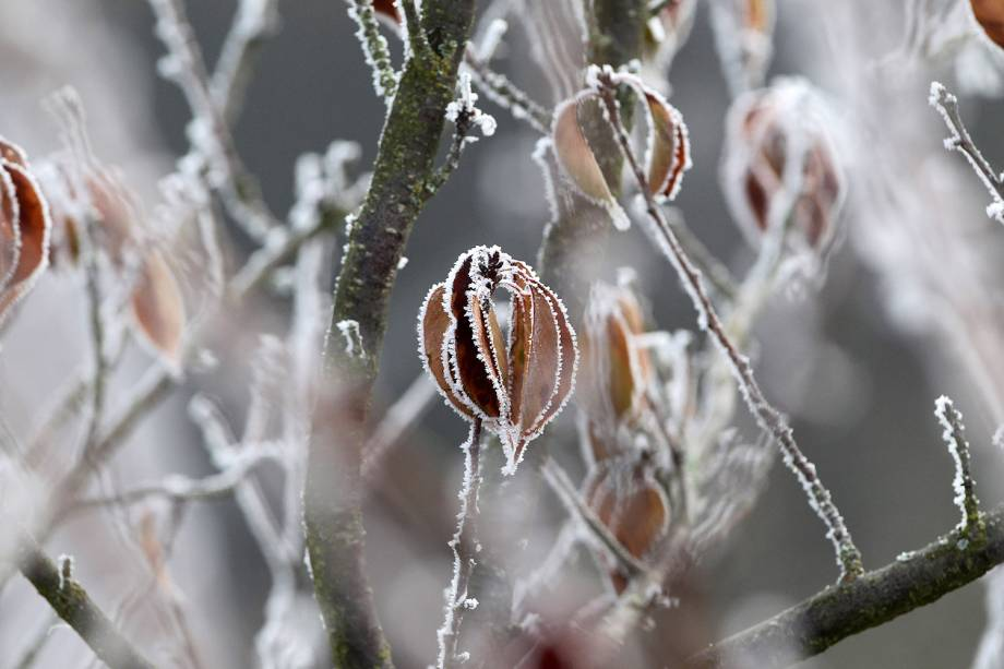 Cidade de Gaiberg, na Alemanha, amanhece com cerejeiras cobertas de gelo com a aproximação da chegada do inverno no hemisfério norte - 08/12/2016