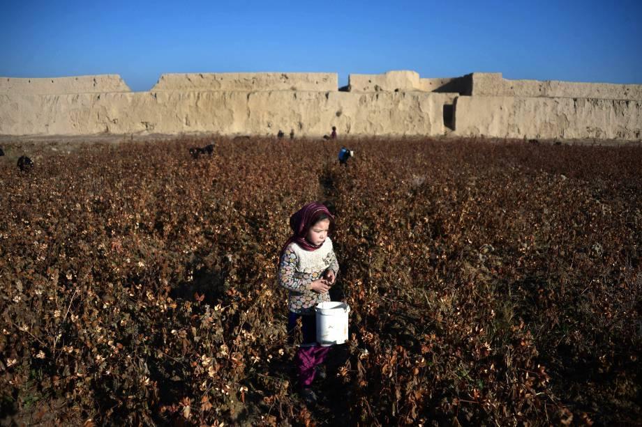 Garota colhe algodão em uma plantação nos arredores de Mazar-i-Sharif, Afeganistão - 01/12/2016