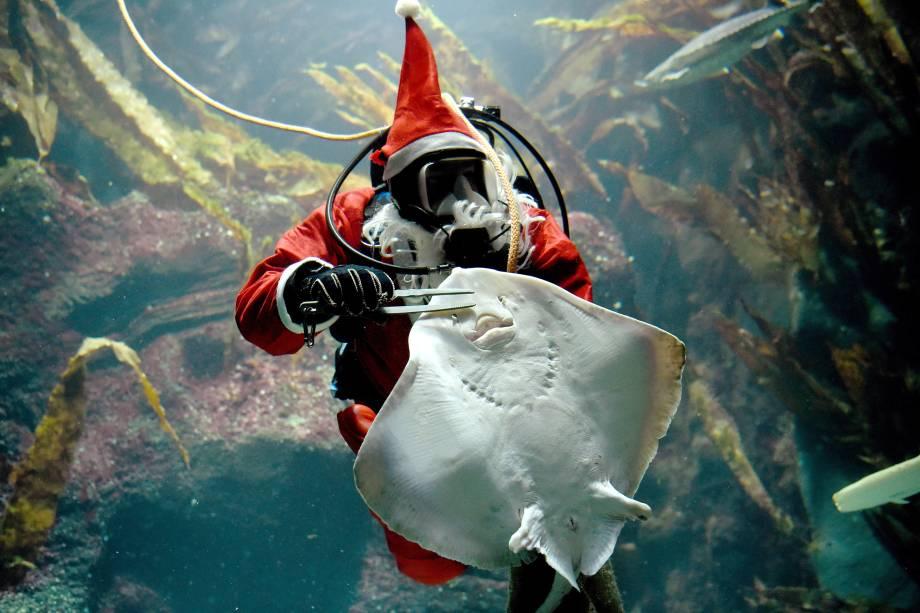 Mergulhador vestido de Papai Noel alimenta uma arraia no aquário Multimar Wattforum em Toenning, na Alemanha - 02/12/2016