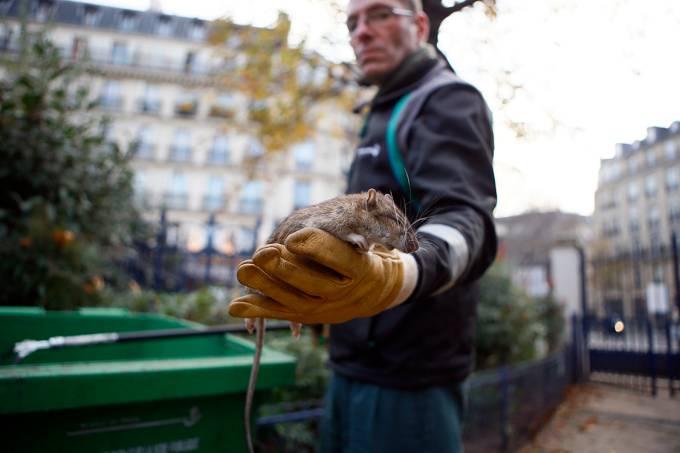 Funcionário mostra um rato morto na praça Saint Jacques Tower, em Paris