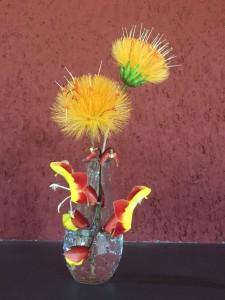 stifftia vaso
