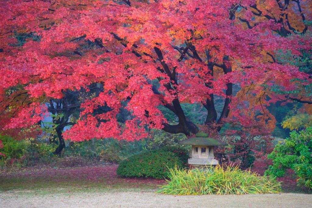 Rikugien is often considered Tokyo's most beautiful Japanese landscape garden. Built around 1700 for the 5th Tokugawa Shogun. Rikugien literally means