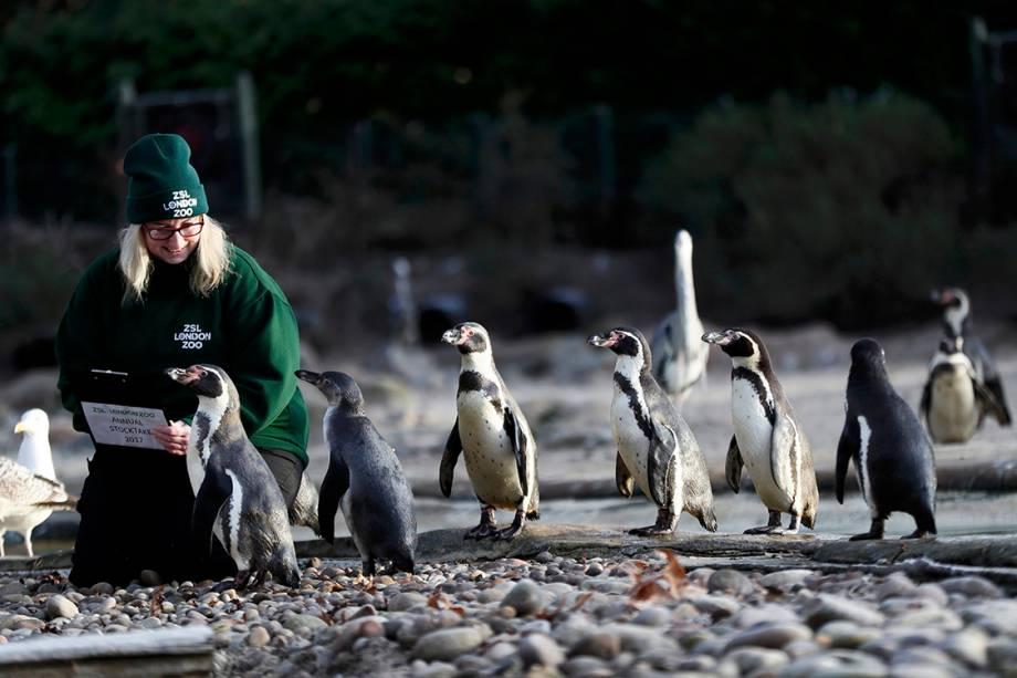 Funcionária registra pinguins durante contagem anual de animais no zoológico da cidade de Londres, Inglaterra - 03/01/2017
