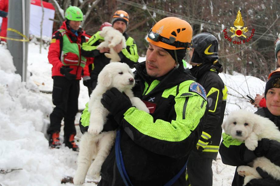 Bombeiros seguram filhotes resgatados de um hotel atingido por uma avalanche, na Itália