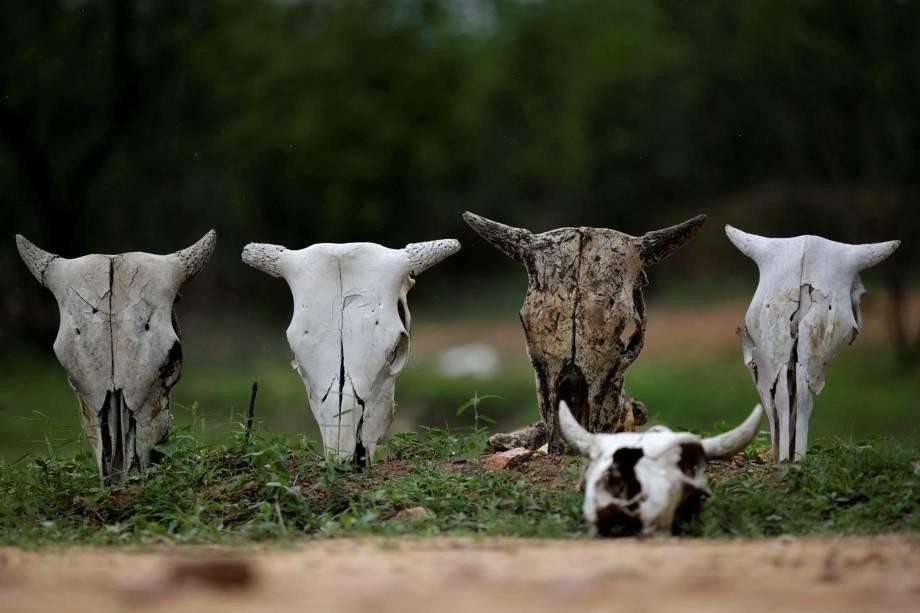 Crânios de gado são vistos na cidade de Coremas, sertão da Paraíba