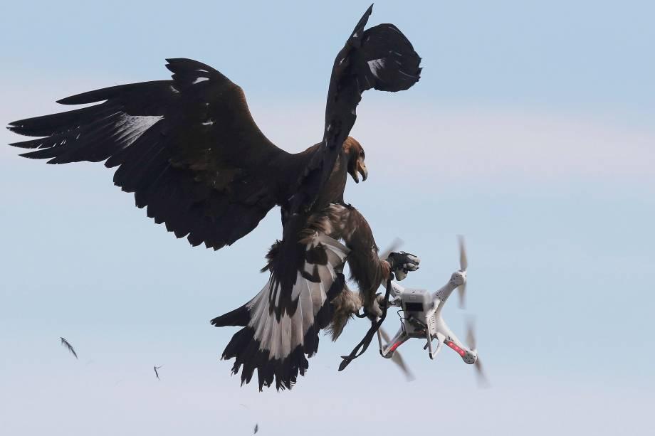 Uma águia-dourada captura um drone durantetreinamento militar n<span>a base aérea francesa de Mont-de-Marsan</span>- 10/20/2017