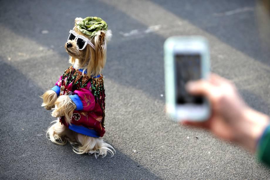 Cachorro de óculos escuros e roupa é fotografado pouco antes do desfile de Outono/Inverno da grife Gucci, na Fashion Week de Milão, Itália- 22/02/2017