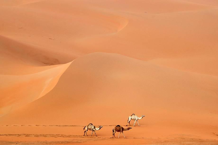 Camelos atravessas o deserto de Rimah nos Emirados Árabes - 27/02/2017
