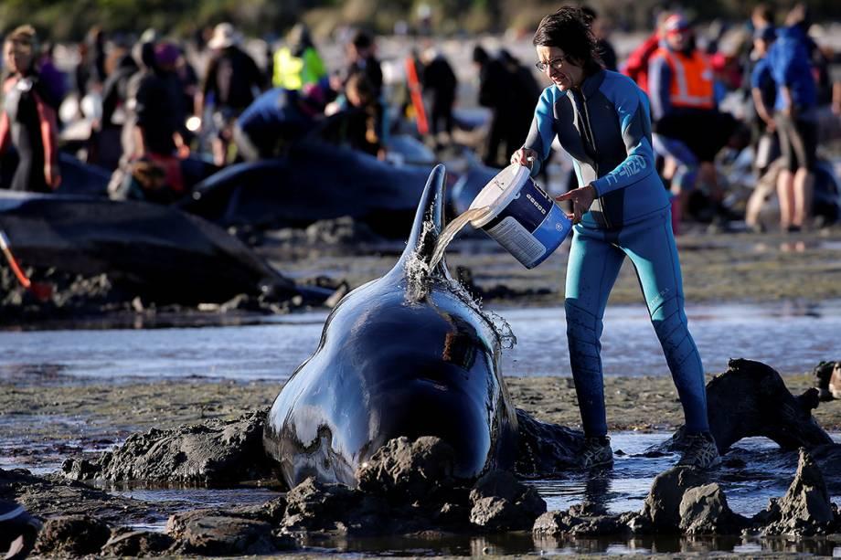 Voluntários trabalham para salvar uma das centenas de baleias que desviaram de sua rota de migração e acabaram encalhadas na praia Golden Bay, na Nova Zelândia - 10/02/2017
