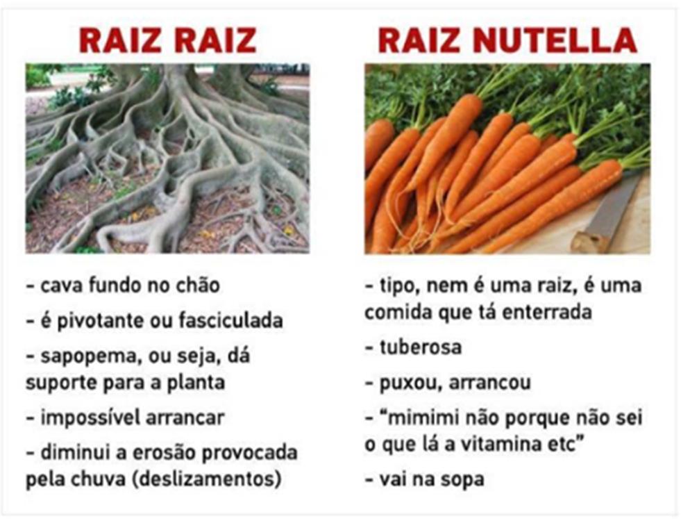 nutella-raiz-5