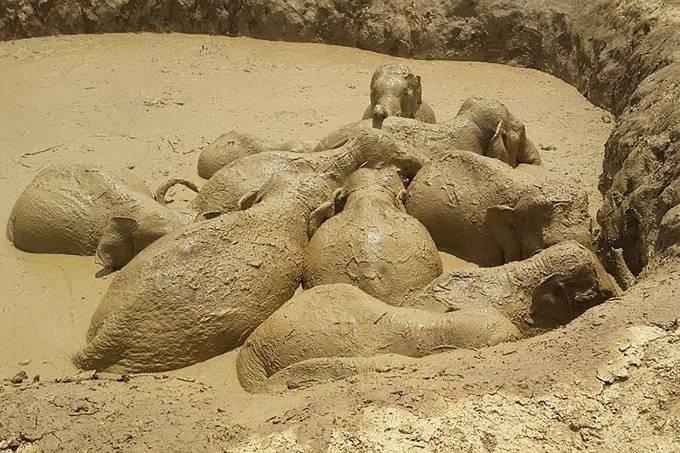 Elefantes atolados no Camboja
