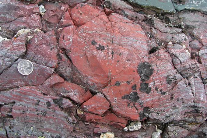 Fósseis 2