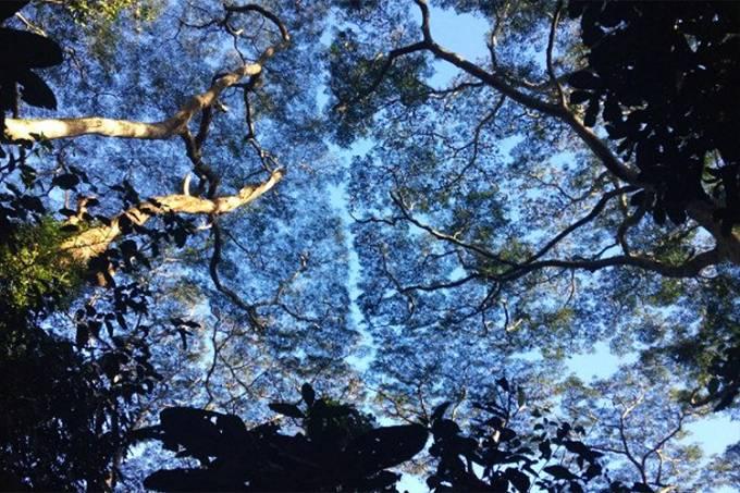 Meio ambiente – árvores