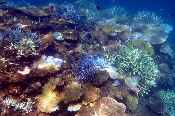 Centre-of-Excellence-for-Coral-Reef-Studies-foto-kerryn-bell-corais-coral