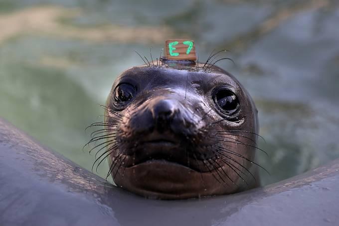 Centro de reabilitação de focas na Califórnia