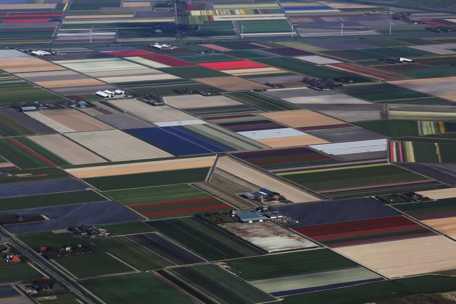 Vista aérea dos campos de tulipas em Den Helder, na Holanda