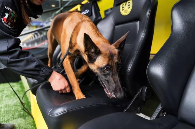 Cão auxilia na segurança no estádio do Borussia Dortmund
