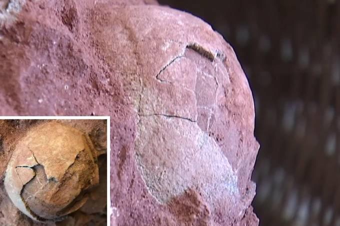 Fósseis de ovos de dinossauro encontrados na China