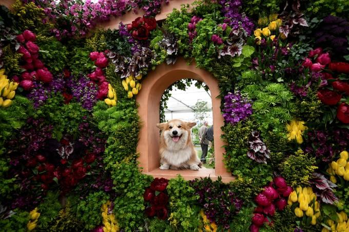Chelsea Flower Show – O festival das flores