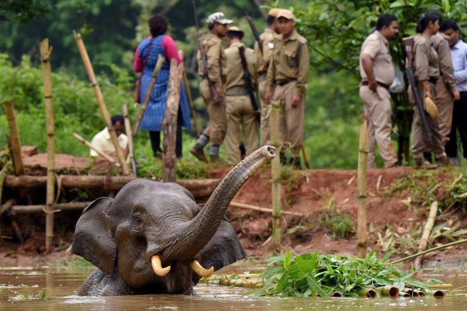 Guardas florestais tentam resgatar um elefante ferido que caiu em um lago no Santuário de Vida Selvagem de Amchang nos arredores de Guwahati, na Índia - 24/05/2017