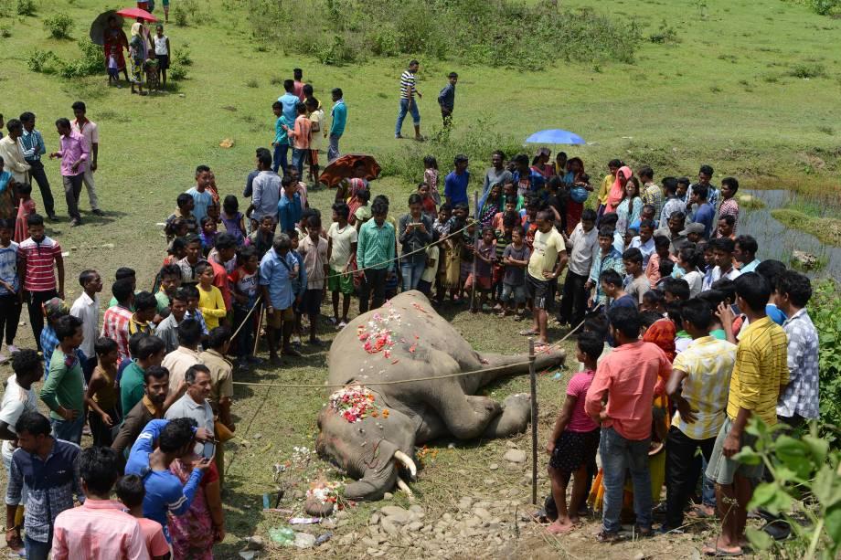 Aldeões indianos e trabalhadores florestais se reúnem em torno da carcaça de um elefante, após o animal ser atingido por um trem de passageiros, nos arredores da cidade de Siliguri, na Índia - 10/05/2017