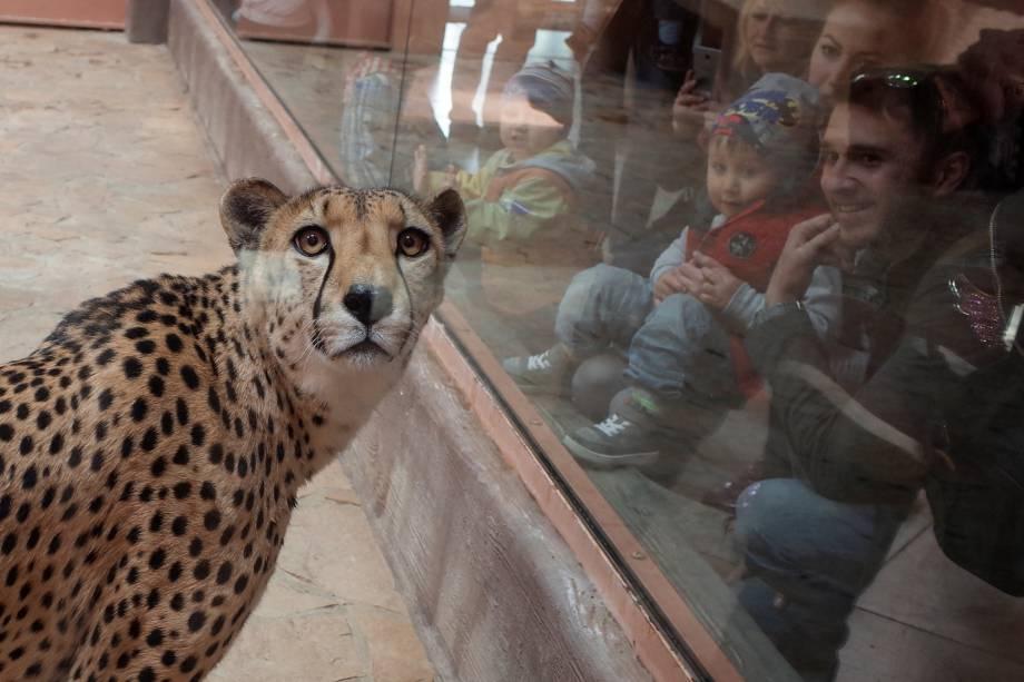 Visitantes olham uma chita no zoológico de Demydiv, Ucrânia