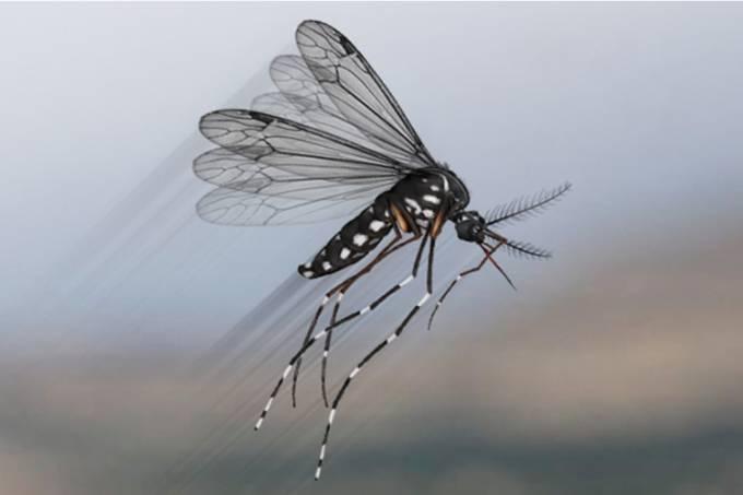 mosquitos-da-febre-amarela-deixam-o-espirito-santo-por-falta-de-seguranca