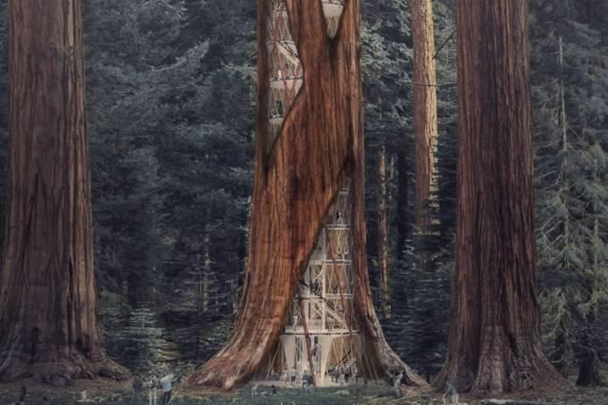 sequoias0