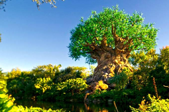 """Atração """"Árvore da Vida"""" no Animal Kingdom"""