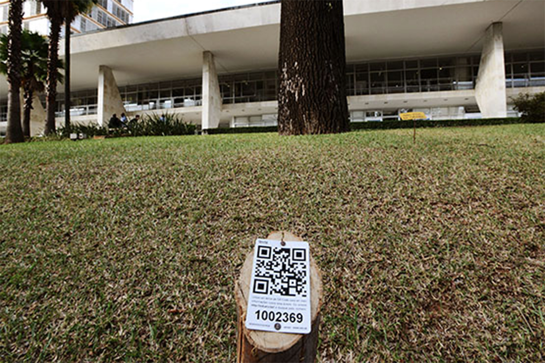 Primeiras árvores com sistema de identificação QR code