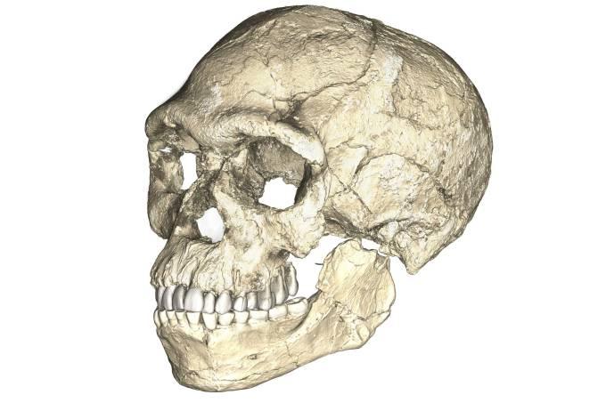Esqueleto Homo sapiens