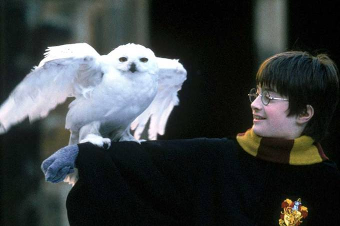 Harry Potter e Edwiges