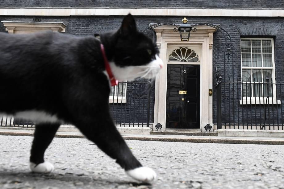O gato Palmerston, funcionário do Ministério das Relações Exteriores do Reino Unido, responsável pelo controle da população de ratos é fotografado em frente à residência oficial da primeira-Ministra Theresa May em Downing Street, Londres - 09/06/2017