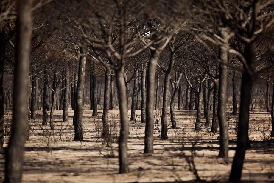 As árvores queimadas são vistas após um incêndio florestal no Parque Nacional de Donana, perto de Matalascanas, no sul da Espanha - 26/06/2017