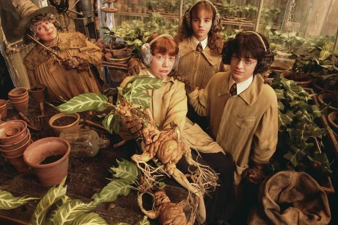 As mandrágoras em Harry Potter