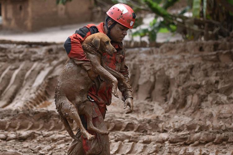 Bombeiros resgatam animais em Paracatu de Baixo, após uma avalanche de lama