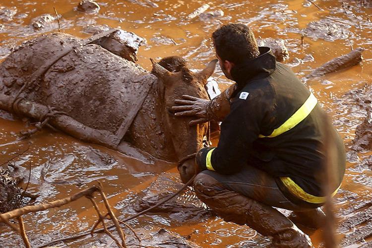 Bombeiros trabalham no resgate de animais presos em meio a lama