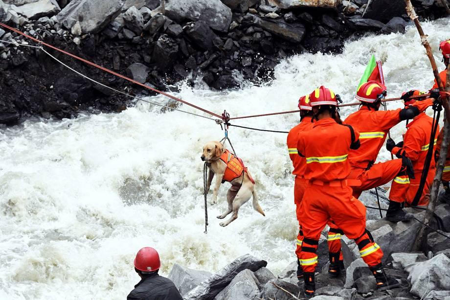 Equipes de emergência usam cachorro para ajudar nos resgates no vilarejo de Xinmo, no sudoeste da China. Um deslizamento de terra deixou 10 mortos e 100 pessoas estão desaparecidas - 25/06/2017