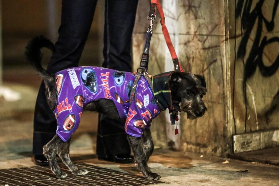 Dona veste ser cachorro com uma roupa para protegê-lo do frio que atingiu a capital paulista