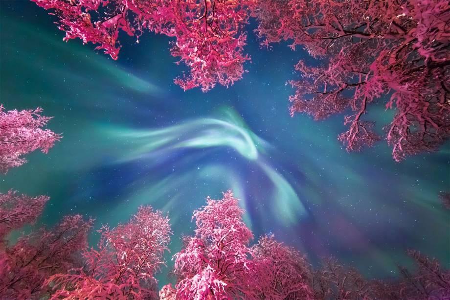 Aurora boreal fotografada durante uma excursão de astrofotografia na região de Murmansk, no norte da Rússia. As luzes aparecem entre as copas congeladas das árvores. Com a iluminação da rua, as folhas ganham um tom vivo de rosa.