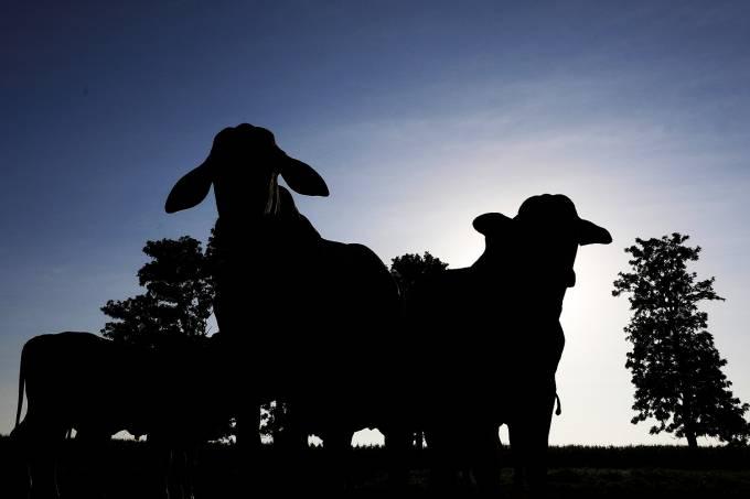 Importação – Economia – Carne fraca – Frigoríficos
