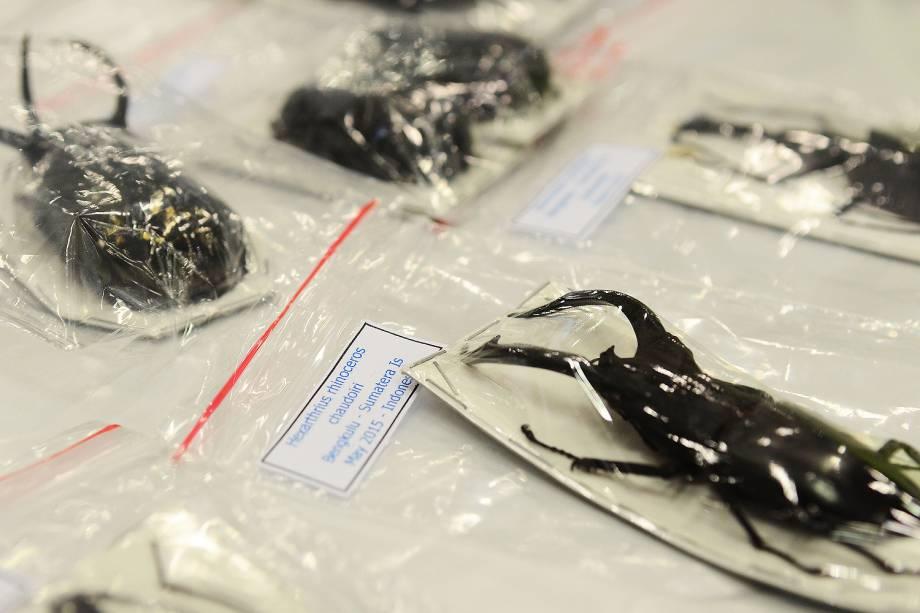 Espécimes da fauna e da flora silvestre apreendidos pela Receita Federal em encomendas internacionais enviadas via Correios - 06/07/2017