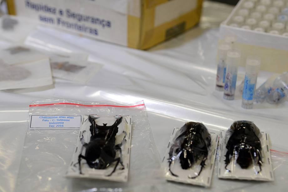 Espécimes da fauna e flora apreendidos na Operação Hermes feita pela Receita Federal em encomendas internacionais enviadas via Correios - 06/07/2017
