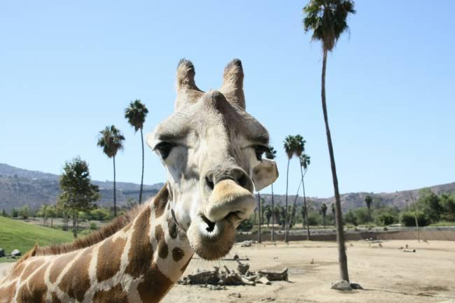 os melhores zoológicos do mundo