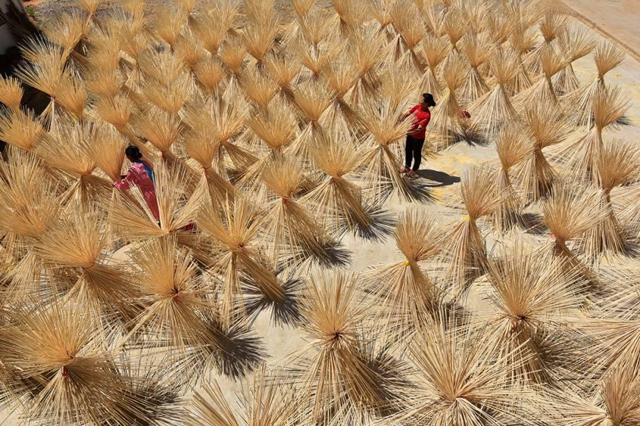 Funcionários trabalham colhendo bambu seco para indústria em uma fazenda próximo ao vilarejo de Xingan, na China - 17/07/2017